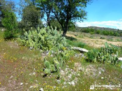 Piedra Escrita Diosa Diana; grupo de senderismo madrid; viajes rutas;lugares con encanto